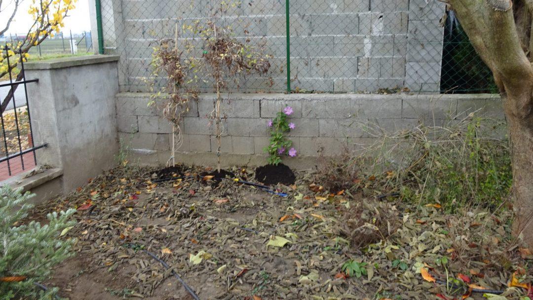 Elhanyagolt kert előtte